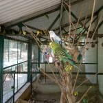 Birds at Zoo!!