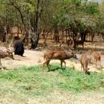 Bear and Deer safari-Bannerghatta National Park