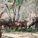Deer Safari-Bannerghatta National Park
