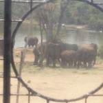 Elephant safari-Bannerghatta National Park