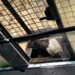 A black Bear jumped on our safari-Bannerghatta National Park